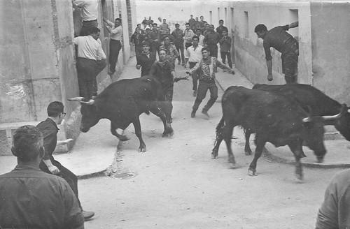 Vacas en la calle