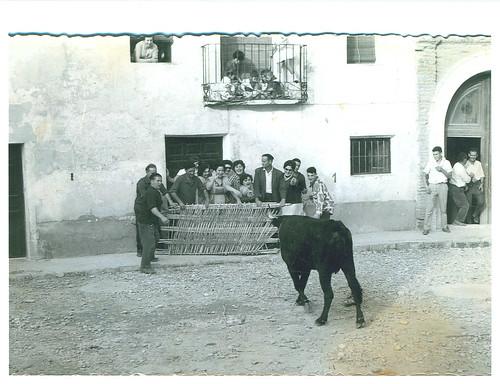 Vacas en la Plaza de la Iglesia