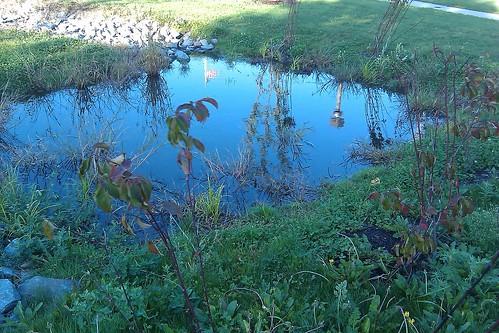 Parmenter: rain garden gets wet!