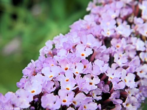 Fiori Piccoli.Foto Fiori Pareri Fiori Piccoli Petites Fleurs Flickr