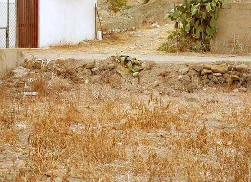 find the hidden cat