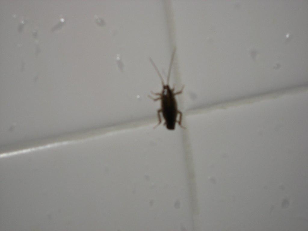 Bathroom Roach