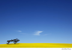 Australia (john white photos) Tags: flower tree yellow clouds farm grow australia bluesky growth crops agriculture southaustralia canola rapeseed eyrepeninsula
