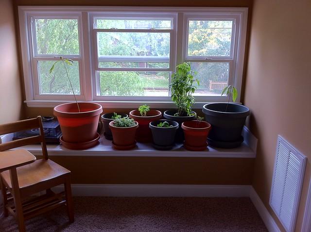 2011 10-18 Indoor Garden
