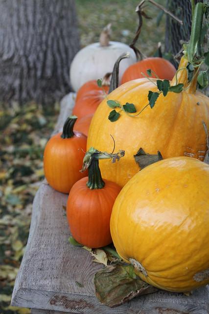 9769 a pumpkin