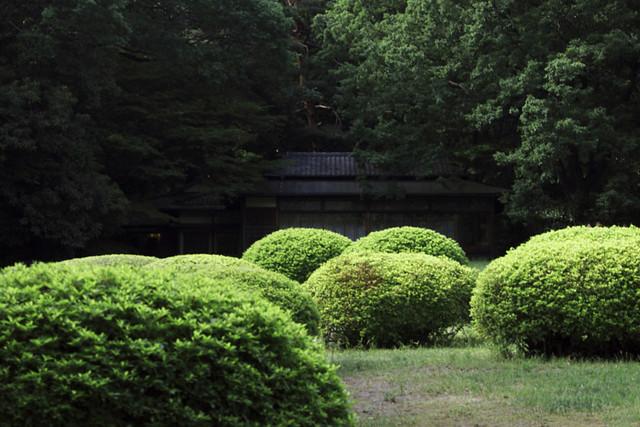 110514_150100_東京_明治神宮