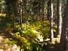 falda del monte en otoño (juanpablo.santosrodriguez) Tags: autumn trees wallpaper tree verde green yellow hojas arbol arboles amarillo otoño leafs fondodeescritorio