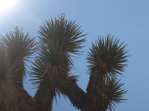 I really liked the Joshua trees