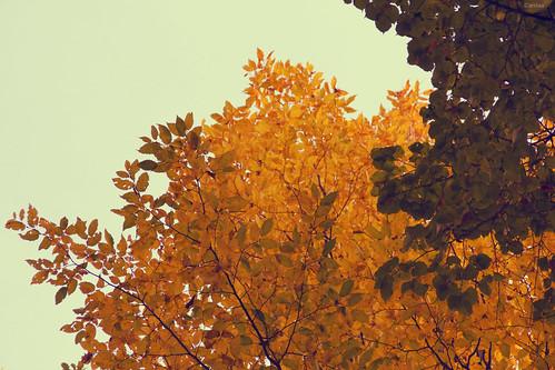 feuilles automne2