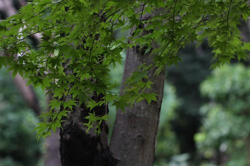 森の中 / In a forest