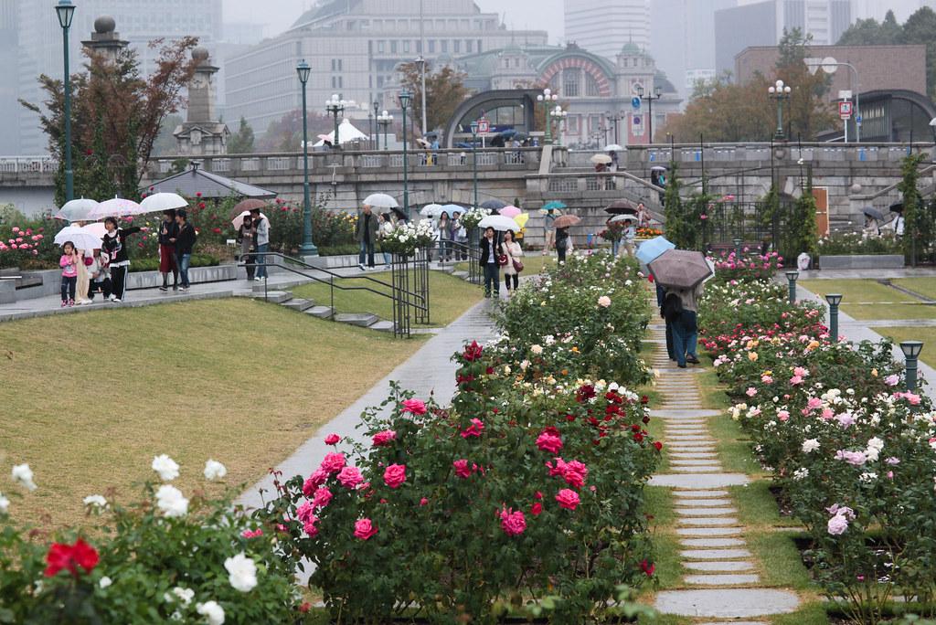 Roses in Nakanoshima koen