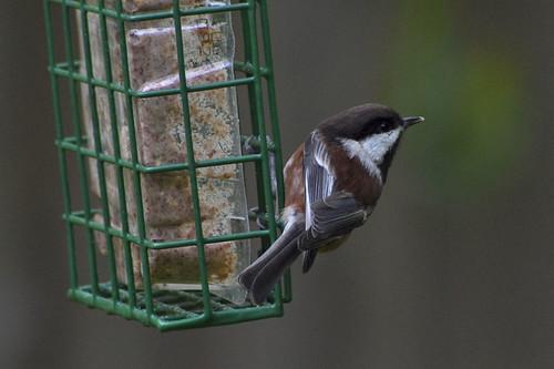 pretty birdie