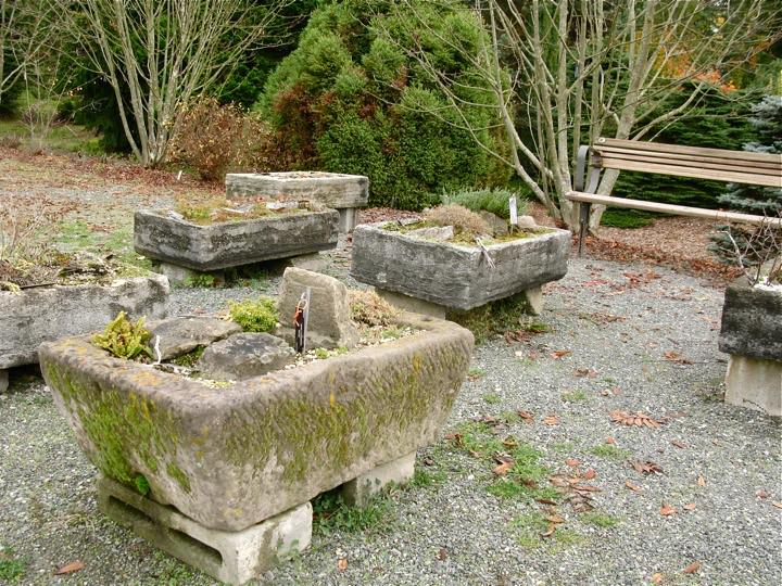 ubc botanical garden 013