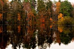 Mirror Pond 5458 (jagpot) Tags: leica autumn pond nikon herbst teich summilux 80mm primelens d3s r80f14