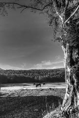 Old Tree... (Mario Vani) Tags: old tree