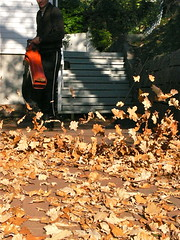 Battle against Fallen Leaves