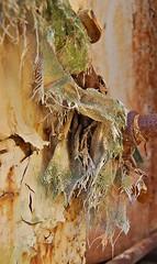 Shaggy (jgurbisz) Tags: plant ny abandoned toxic forrest nj vacant exploration refinery chemical ue baekeland wwwvacantnewjerseycom