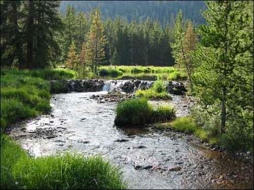 A picture of one the U.S. Forest Service's 89 experimental forests. (Photo courtesy of the US Forest Service)