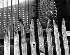 lights, shadows, & fences (marianna_a.) Tags: light shadow bw fence monochromatic trellis grayscale hff mariannaarmata