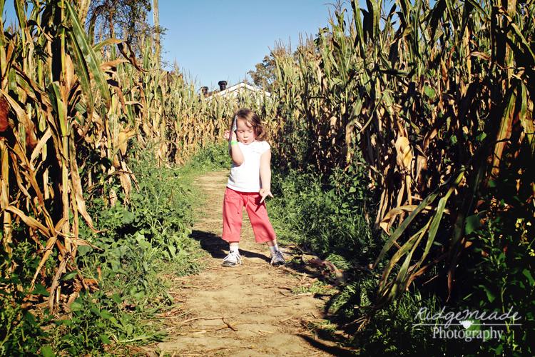 Corn Maze #1