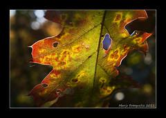 (Marjo1963) Tags: autumn forest leaf herfst blad bos coloured kleuren 102011