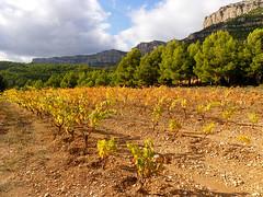 Montsant and Priorat (Marlis1) Tags: mountains pentax cliffs vineyards x70 priorat montsant montes marlis1 rebberge gettyimagesiberiaq3
