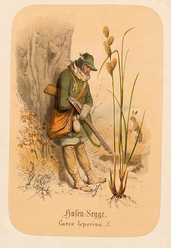 007-Liebre-Juncia-Illustrirtes Kräuterbuch –Aquarelle- 1870-Adolf Schroedter