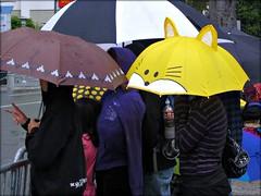Under the Weather - photo jeannerene (jeanneren) Tags: siliconvalley umbrellas veterans sanjoseca santaclaracountyca veteransparade umbrellasintherain jeannerenephoto sanjoseveteransdayparade veteransday2011 peoplehuddledunderumbrells