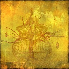 ~ (~Ania Tatarynowicz~) Tags: tree texture arbre textured alia aniatatarynowicz