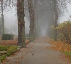 Graveyard fog (yellowgreywolf) Tags: november trees graveyard fog nikond50 leafs yellowgreywolf