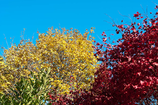 Fall colors, blue sky