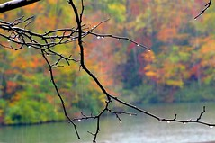 Offering [Explored] (Universal Pops ( Computer Died)) Tags: autumn color nature water leaves rain season virginia droplets drops branches williamsburg change yorktown twigs colonialparkway tistheseason platinumheartaward jonesmillpond