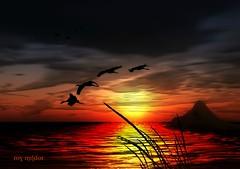 A Sunset (Roy Mildor / Creator) Tags: artistsoftheyear mygearandme mygearandmepremium mygearandmebronze ringexcellence dblringexcellence tplringexcellence artistoftheyearlevel2 musictomyeyeslevel1 aboveandbeyondlevel1