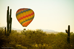 Hot Air Balloon In the Lush Arizona Desert With Saguaro Cactus (Striking Photography by Bo Insogna) Tags: arizona cactus balloons fly flying colorful desert balloon az transportation saguaro hotairballoons oldfashioned
