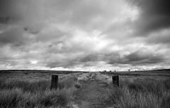 Gateposts (l4ts) Tags: landscape blackwhite heather derbyshire peakdistrict grasses footpath darkpeak moorland foxhouse gateposts britnatparks nellcroft