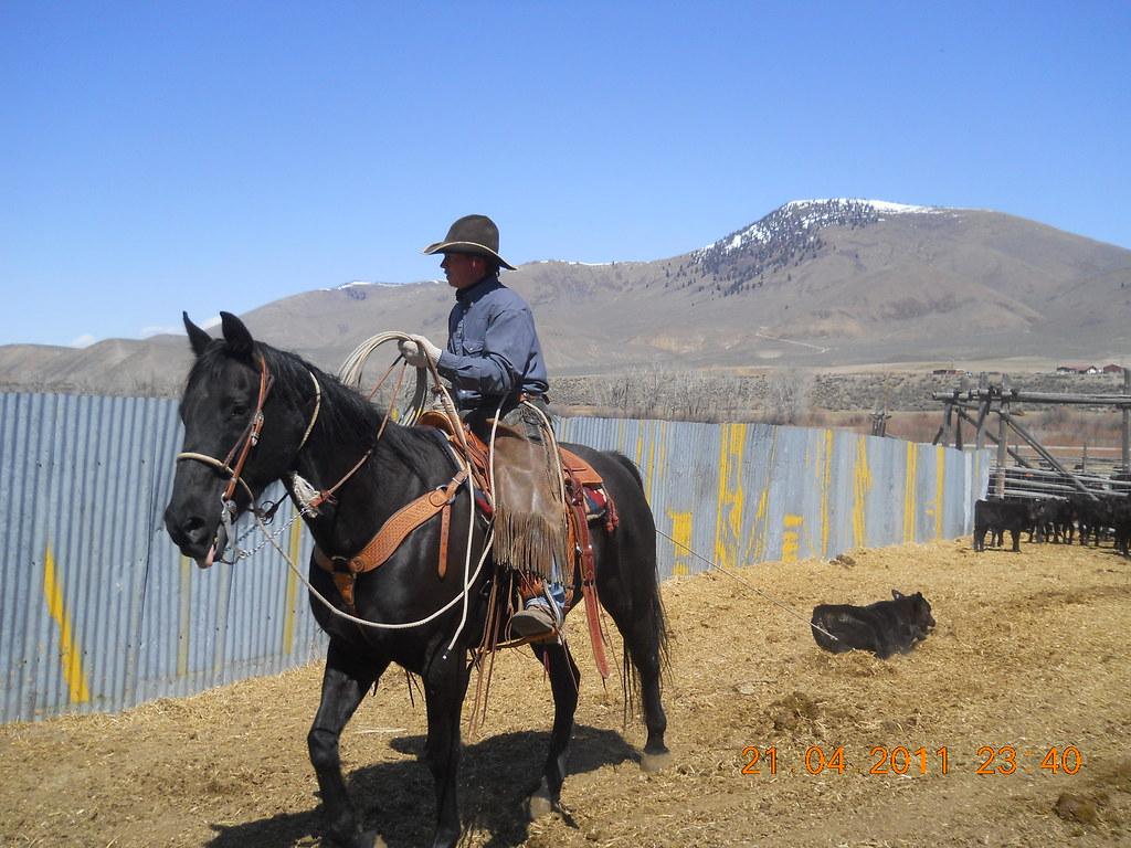 miner cowboy or farmer Alabama farmers coop, decatur, al cattle today, fayette, al  mineral county  miner, creede, co del norte  cowboy digest, laurel, mt sheep canada.