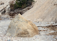 Glacial Erratic with Pegmatite (sandy richard) Tags: usa newyork unitedstates geology wildwood wadingriver wildwoodstatepark sandyrichard longislandgeology sandrarichard