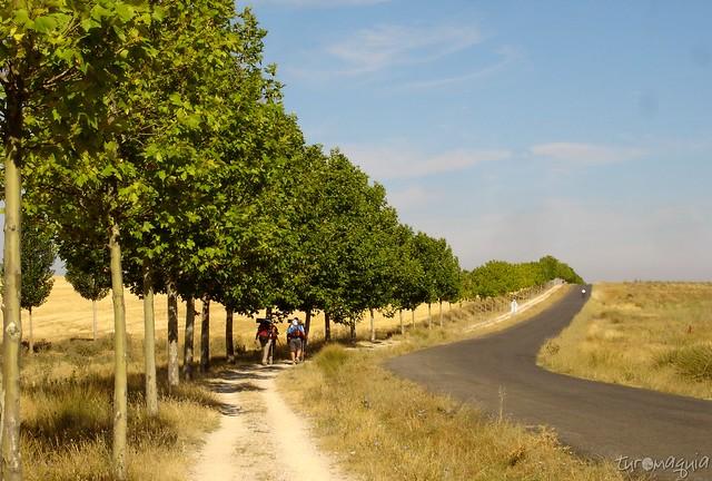 Caminho de Santiago Francês