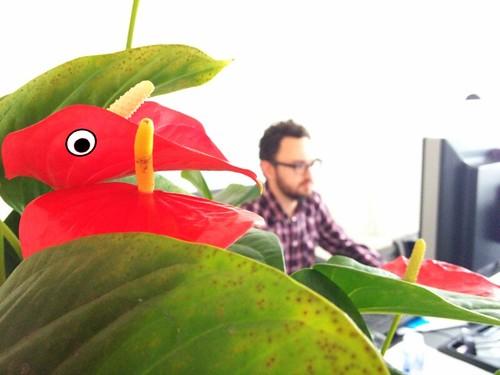 igor eating plant bird