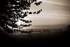 Morning Fog (Martin Schweitzer) Tags: bayern deutschland nebel bäume sonnenaufgang arbeitsweg schwarzweis barbing yahoo:yourpictures=landscape