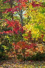 fall-9749.jpg