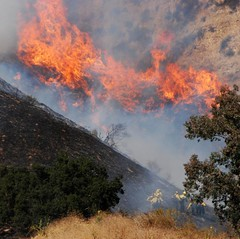 LAFD Tackles Lake View Terrace Wildfire