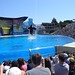 Sea World with SYR - 039