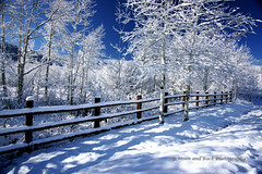 And Here Winter Comes! (Aspenbreeze) Tags: winter sky snow fence bravo colorado frost shadows hoarfrost powderhorn grandmesa aspentrees impressedbeauty aspenbreezes artistoftheyearlevel2