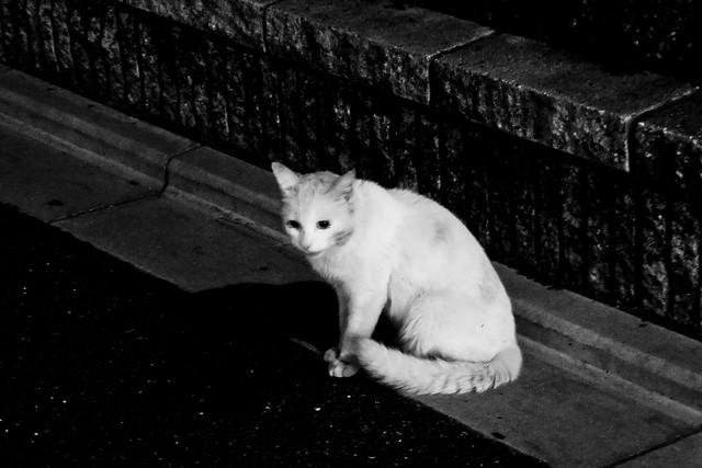 Today's Cat@2011-10-28
