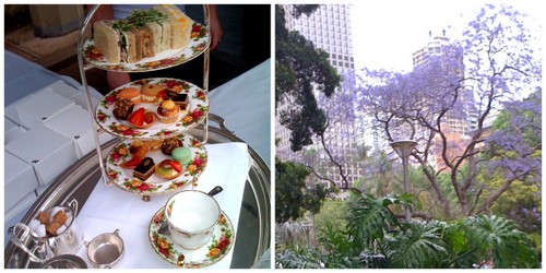 QVB High Tea and Jacaranda Tree
