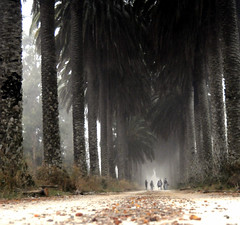 Ways of seeing the world (luisa_m_c_m_cruz) Tags: road morning autumn portugal fog alley photographers palmtrees leafs vla misterious lowperspective salvaterrademagos pffg abigfave valadaprincesa