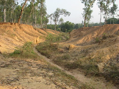 Khoai at Sonajhuri (Weekend Destinations) Tags: santiniketan sonajhuri