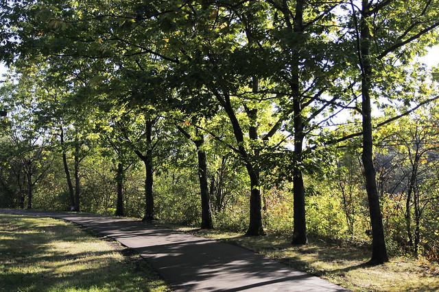 summer trees2