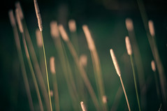 Variations on a theme (MMortAH) Tags: autumn green fall grass 50mm nikon bokeh 14 explore nikkor d90
